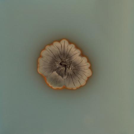 Fungi (Coffret)