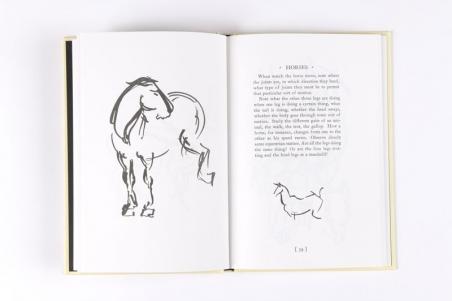 Alexander Calder - Animal Sketching